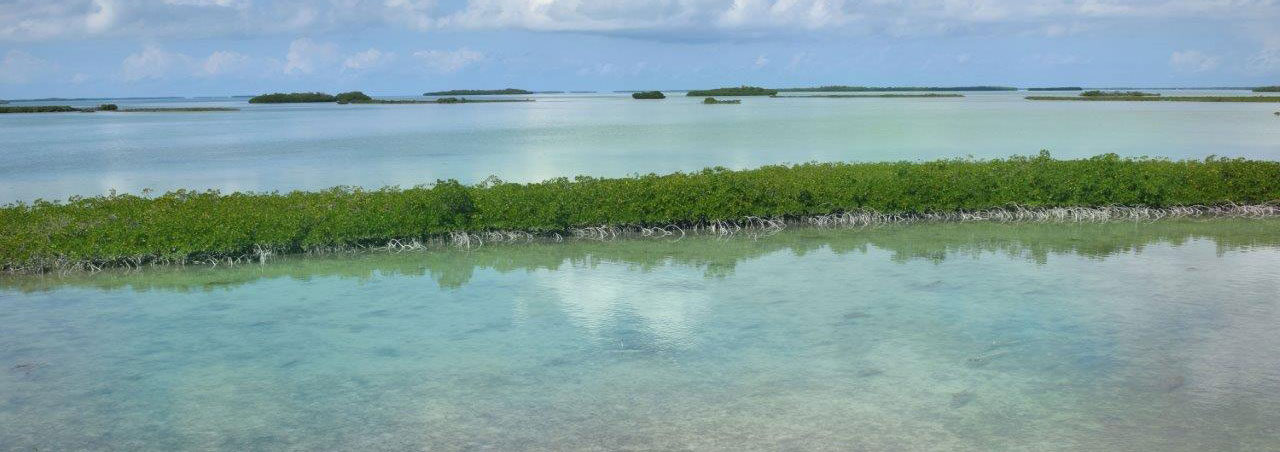 Skinny water and mangroves Saddlebunch Keys