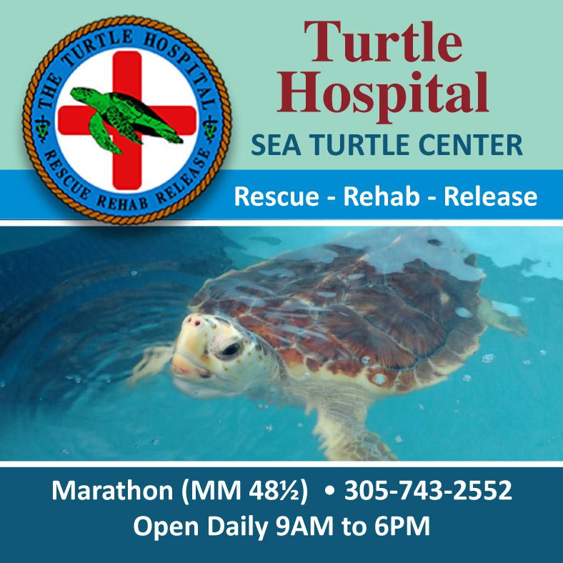 Turtle Hospital